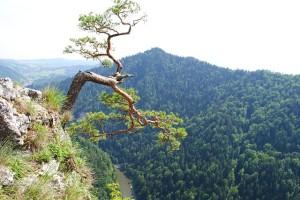 mountain-92841_640
